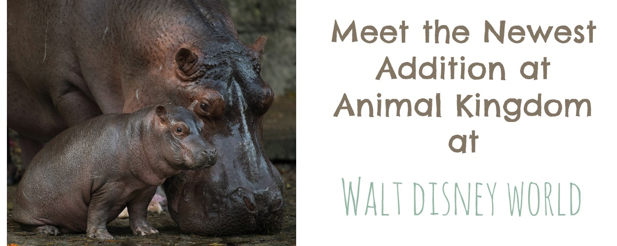 Meet the Newest Addition at Animal Kingdom at Walt Disney World | MyPixieDustDiary.com | Next time you're on a safari, be sure to keep an eye out for this little guy!